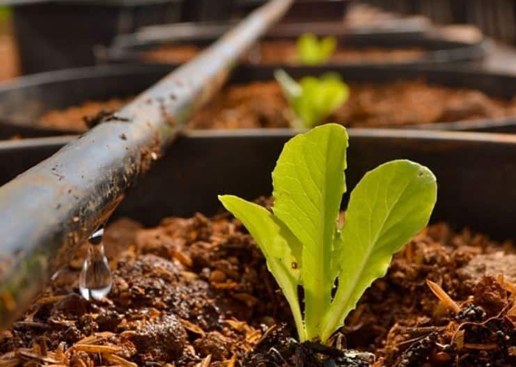 reuso-esgoto-tratado-producao-hortalicas