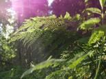 economia-verde-espirito-santo-2