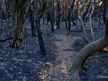 fires-damage-watersheds