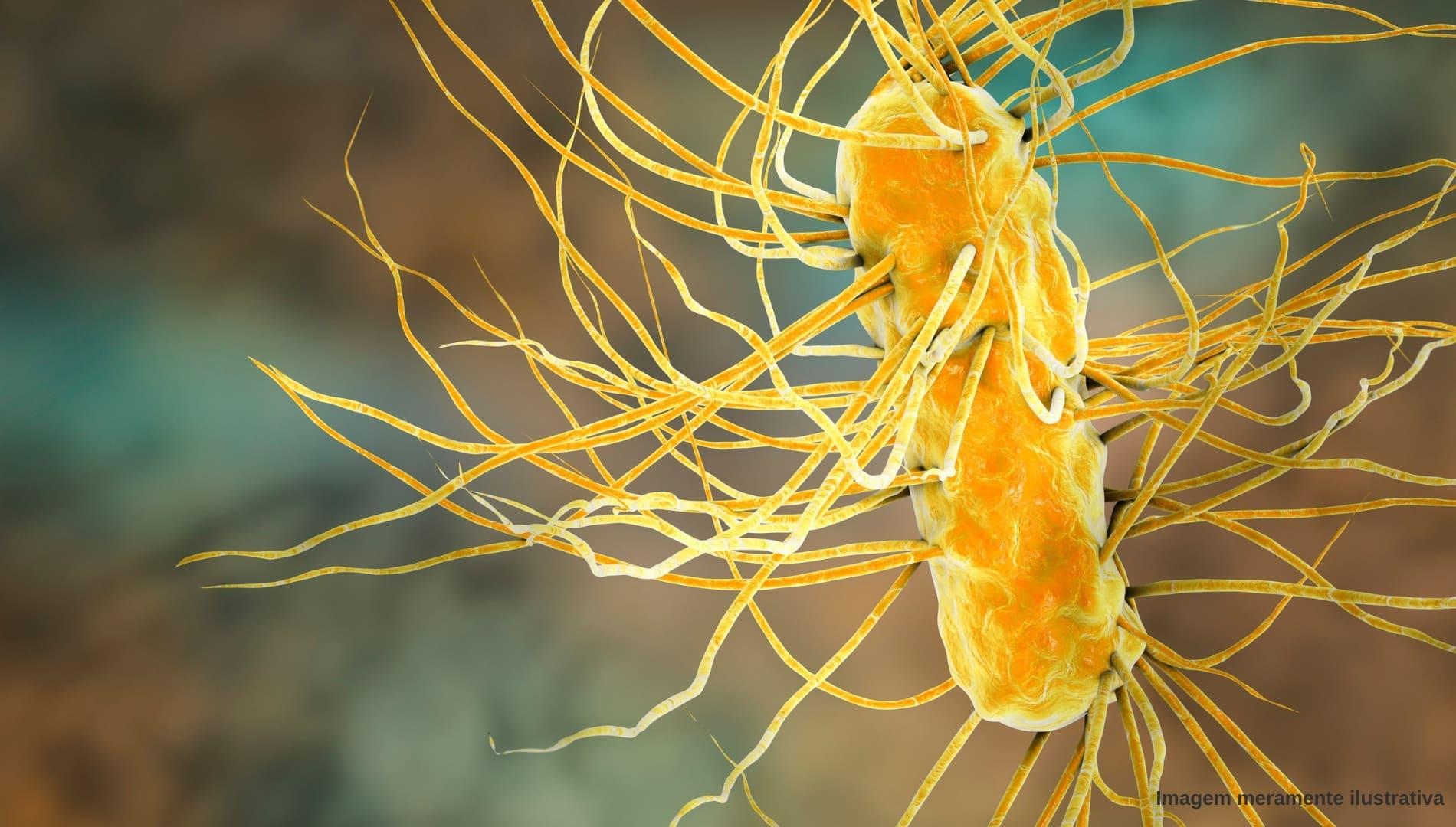 bactérias Escherichia Coli (E. Coli)